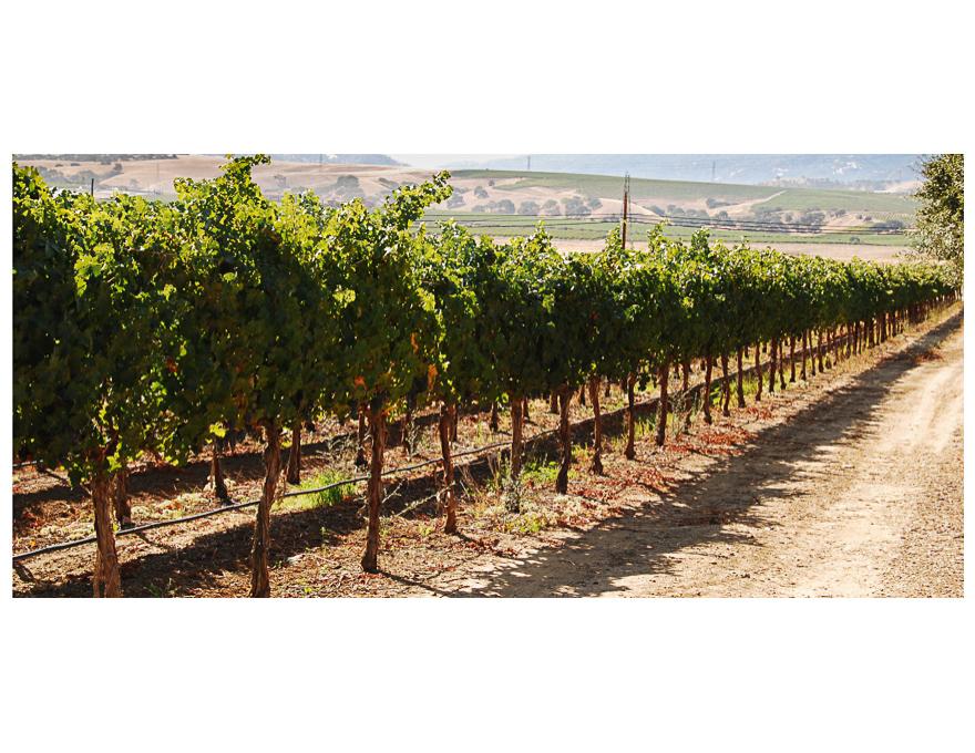 2009 Wine livermore-02